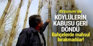 Erzurum'da kargalar köylülerin çilesi oldu