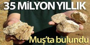 Muş'ta 35 milyon yıllık deniz canlıları fosili bulundu